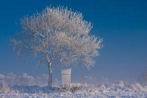 Winter in der Südermarsch