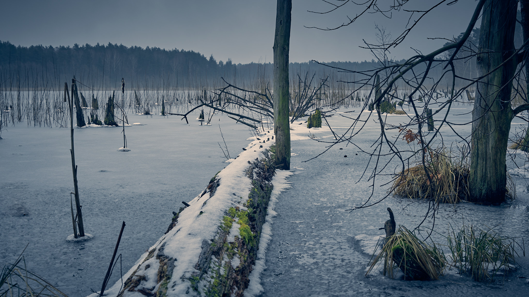 Winter am Mühlensee